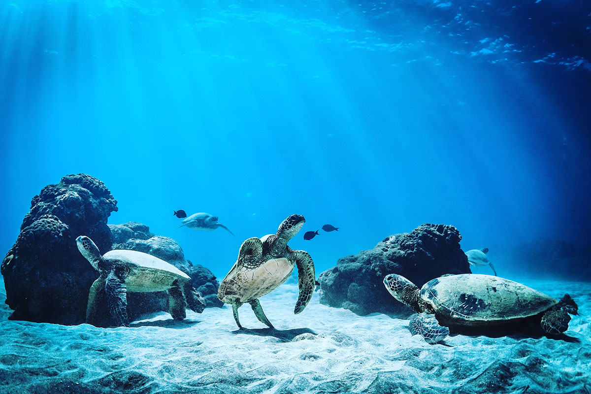 corals turtles